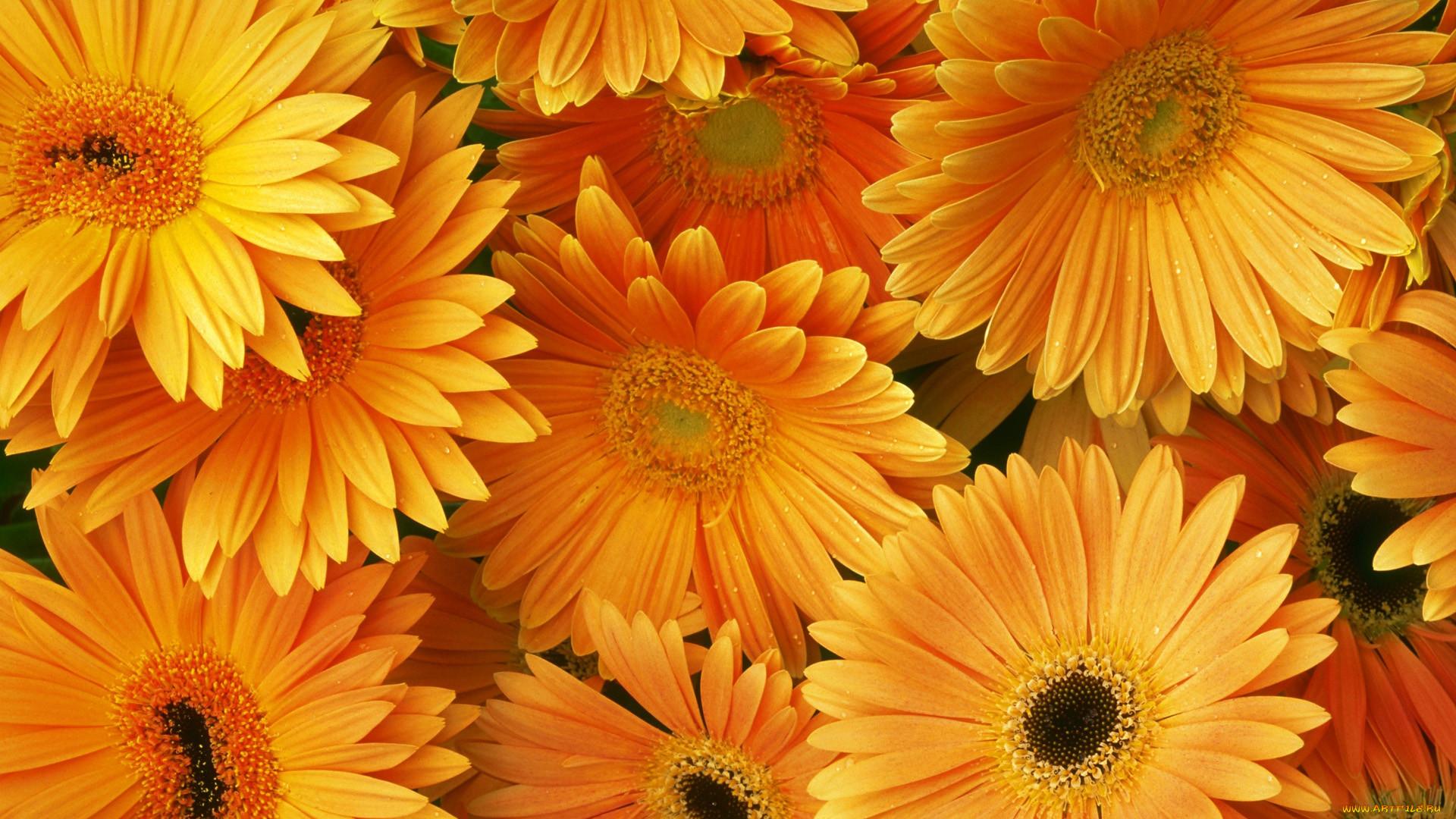 Букеты цветов фото в декоративных сумках